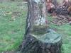Was ooit boom is nu stoel