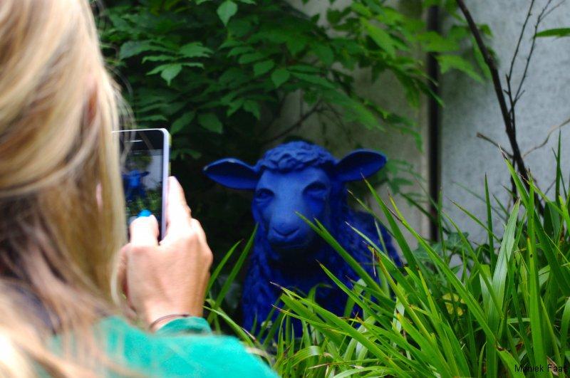 een blauw schaap