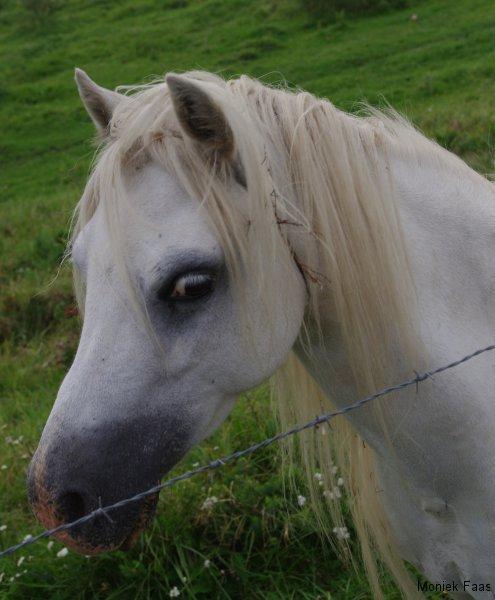 Loop lekker door, denkt het paard