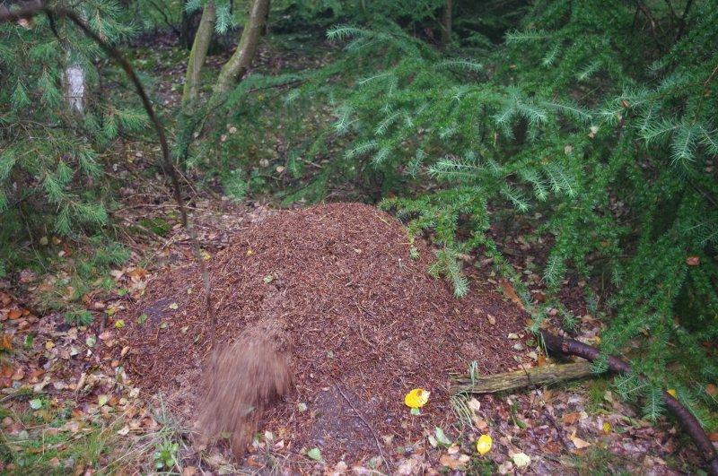 Actie in het mierennest